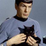 1617082937 Los mejores nombres de gatos de Star Trek para tu