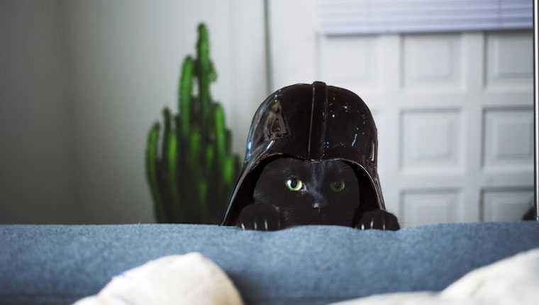 gato con casco de darth vader