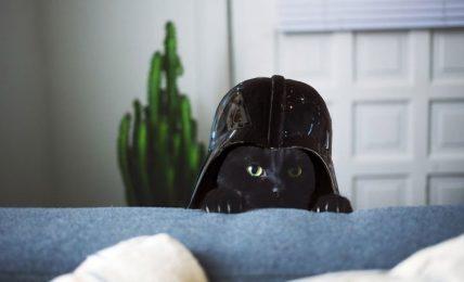1617093630 Nombres de gatos de la saga de Star Wars para