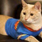 1617116647 Nombres de gatos heroicos y villanos inspirados en las peliculas
