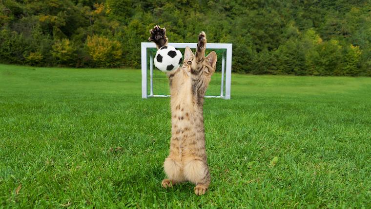 Gato, jugar al fútbol