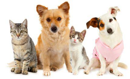 1617207432 Los 10 nombres de perros y gatos mas populares de