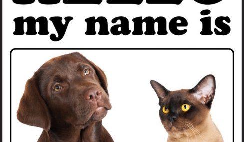 1617212745 Los 10 nombres de perros y gatos mas populares de