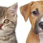 Los 10 nombres de perros y gatos mas modernos