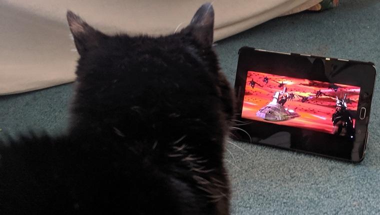 gato mirando flash gordon