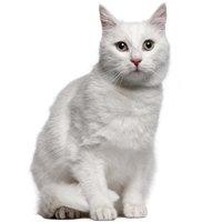 Nombres de gatos blancos Mis Gatos y Yo