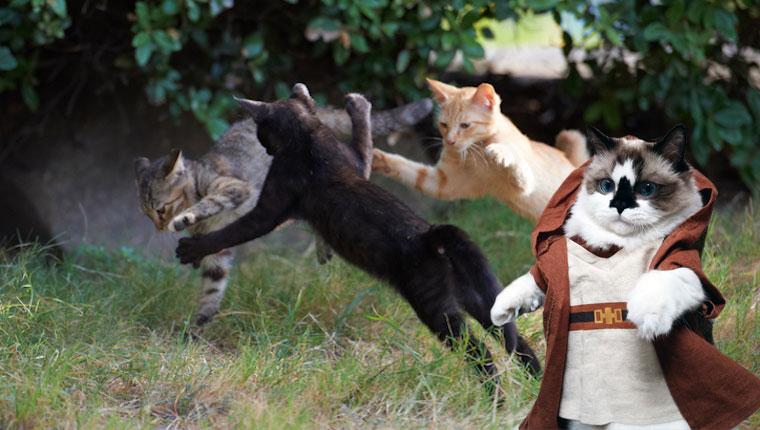 jedi cat entrenando a otros gatitos