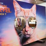 Nombres de gatos heroicos y villanos inspirados en el universo