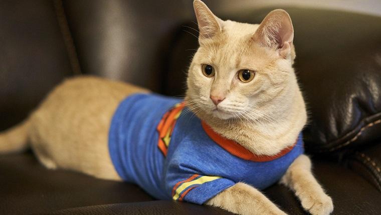 Gato en camiseta de Superman