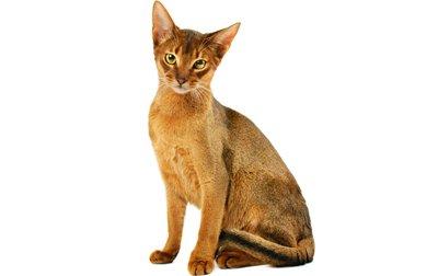 Nombres para gatos atigrados Mis Gatos y Yo